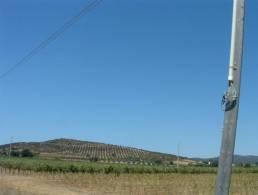Picture Azienda agricola Capalbio, Tuscany