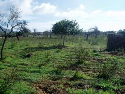 Building plot near Llucmajor,