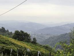 Picture Terra Monta, Piedmont