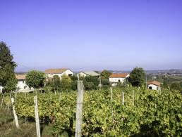 Picture Borgo Monferrato P , Piedmont