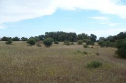 Picture Finca plot to build in Son Mesquida, Felanitx, Baleares