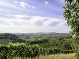 Picture Cascina Pesce A, Piedmont