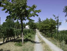 Picture Cascina Rina, Piedmont