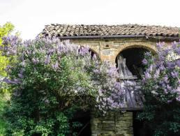 Picture Casa Lillac, Piedmont